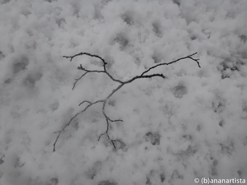 THE LOST LITTLE BRANCH minimal art zen photography by (b)ananartista sbuff © 2015 all rights reserved
