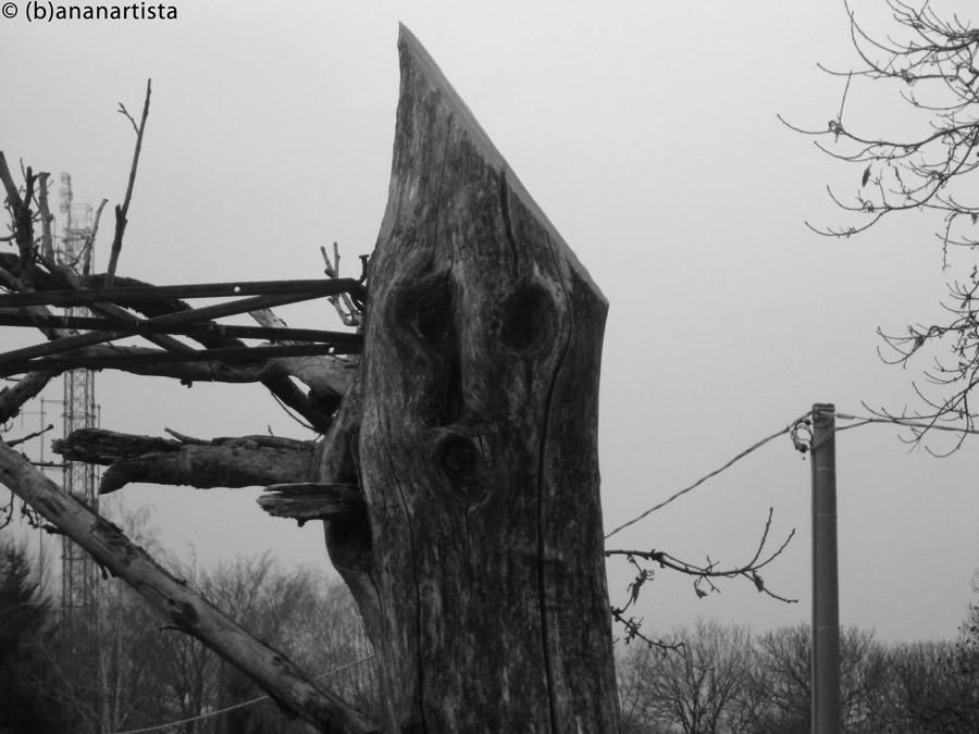 THE SCREAM TREE landscape photography by (b)ananartista sbuff © 2016 all rights reserved