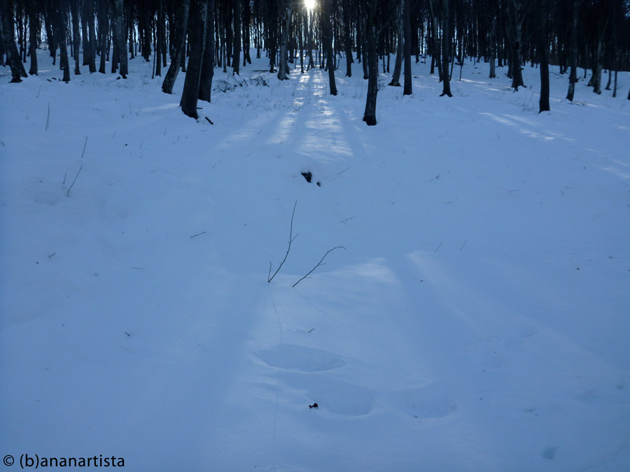 LA LUCE DEL SOLE FILTRA FRA GLI ALBERI nature landscape photography by (b)ananartista sbuff © 2016 all rights reserved