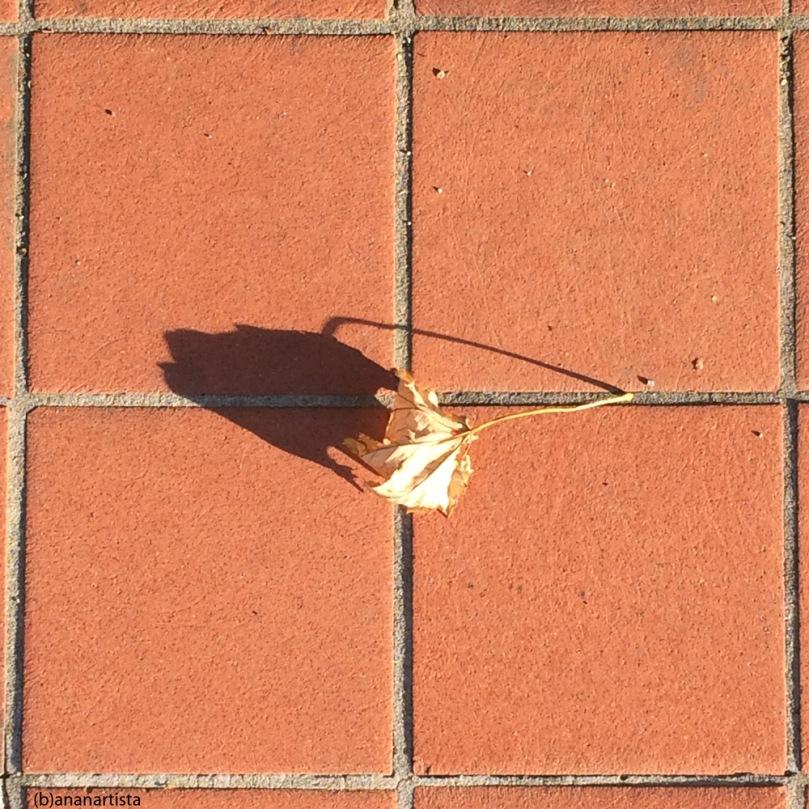 la foglia secca: fotografia di (b)ananartista sbuff