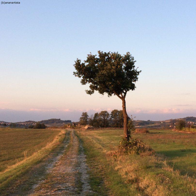 paesaggio con chioma: fotografia di (b)ananartista sbuff