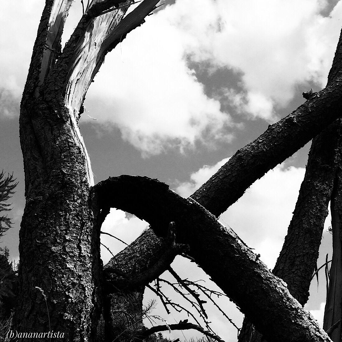 mammoth mastodon photography by (b)ananartista sbuff