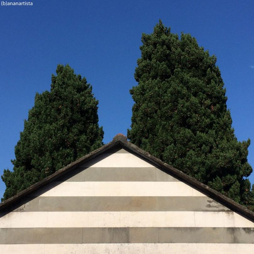 cypress depress: minimal outsider photography art by (b)ananartista sbuff