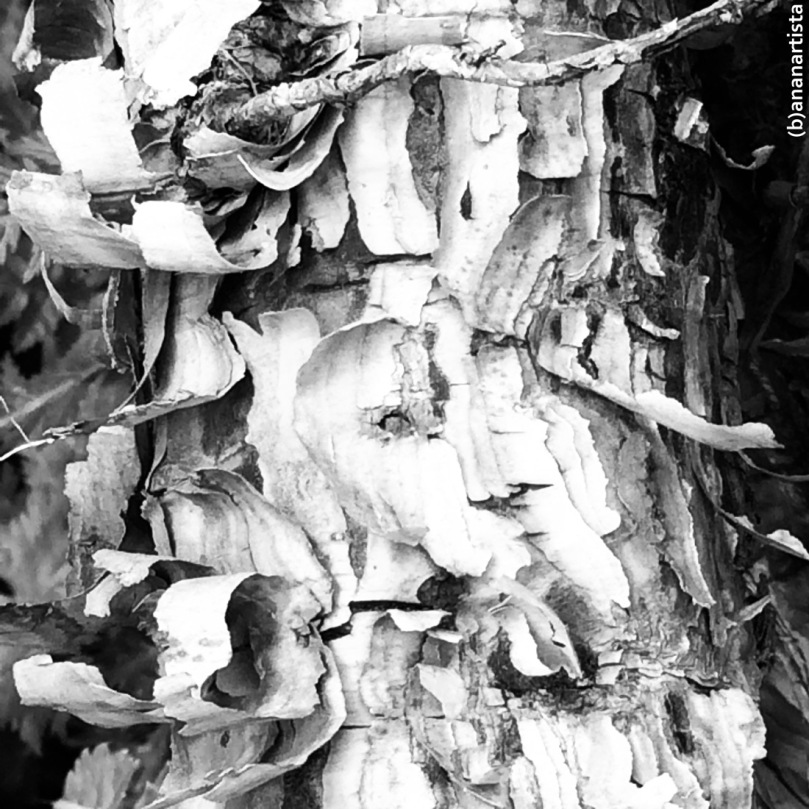 old bark: macro nature black and white photography art by (b)ananartista sbuff