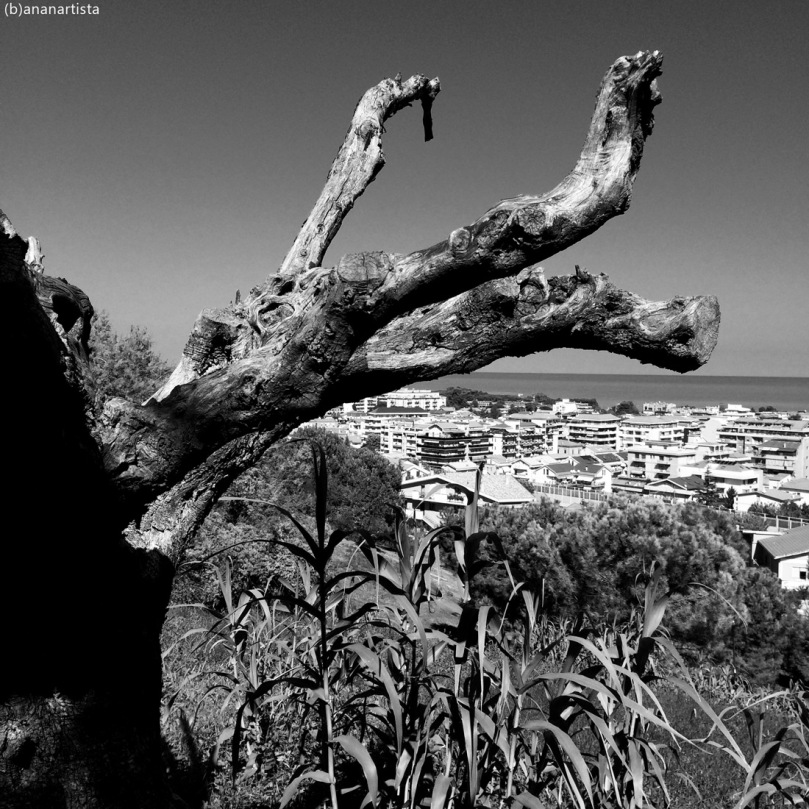 amorphous mastodon: black and white landscape photography by (b)ananartista sbuff