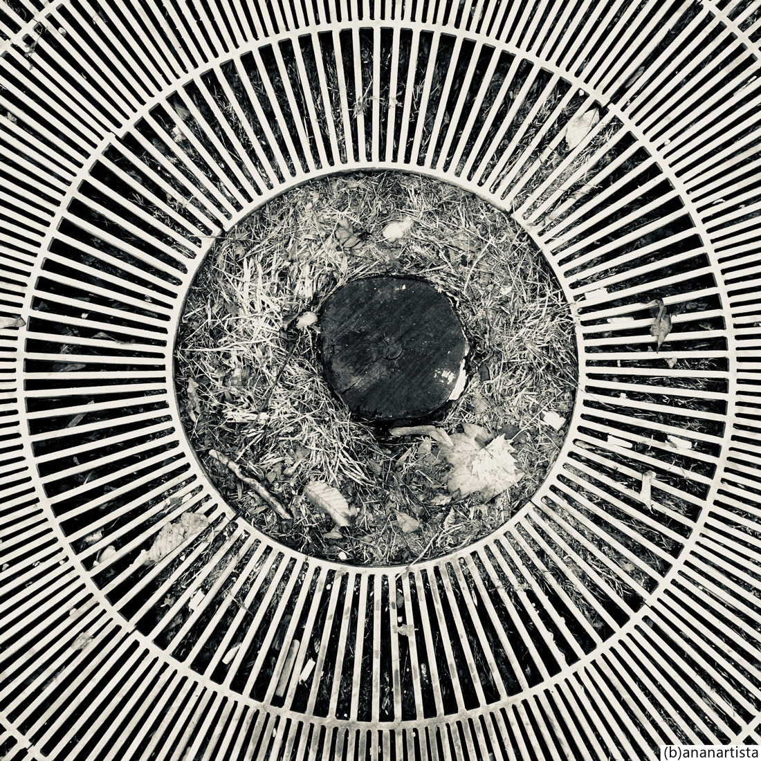 cerchi concentrici: fotografia in bianco e nero di (b)ananartista sbuff