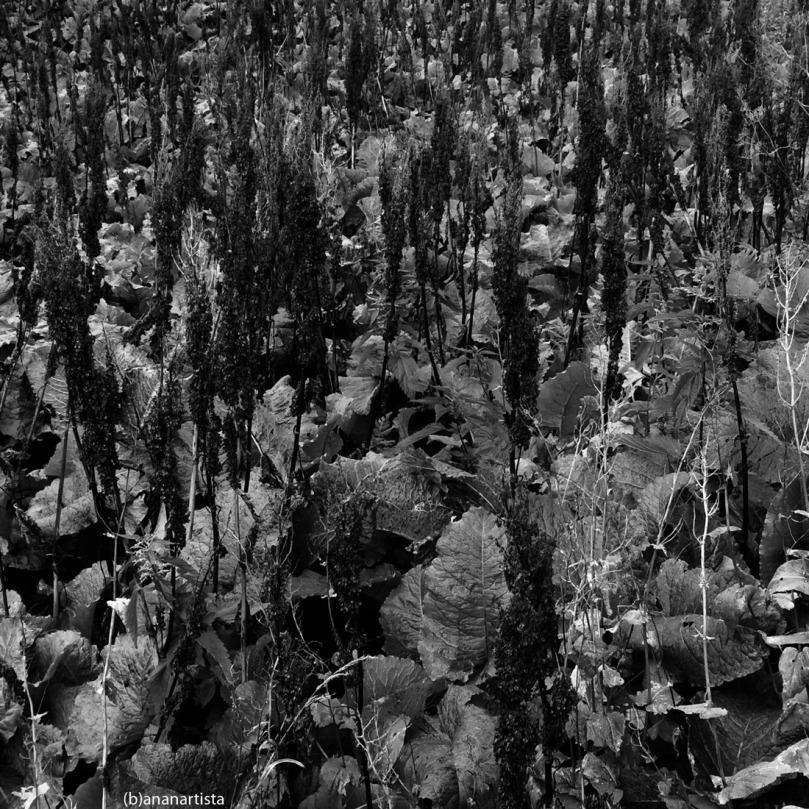 jardin sans fin: fotografia di (b)ananartista sbuff