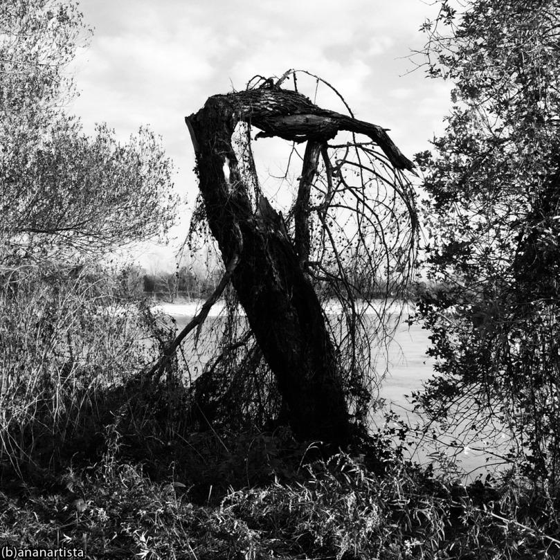Icarus Mastodon: black and white photography by (b)ananartista sbuff