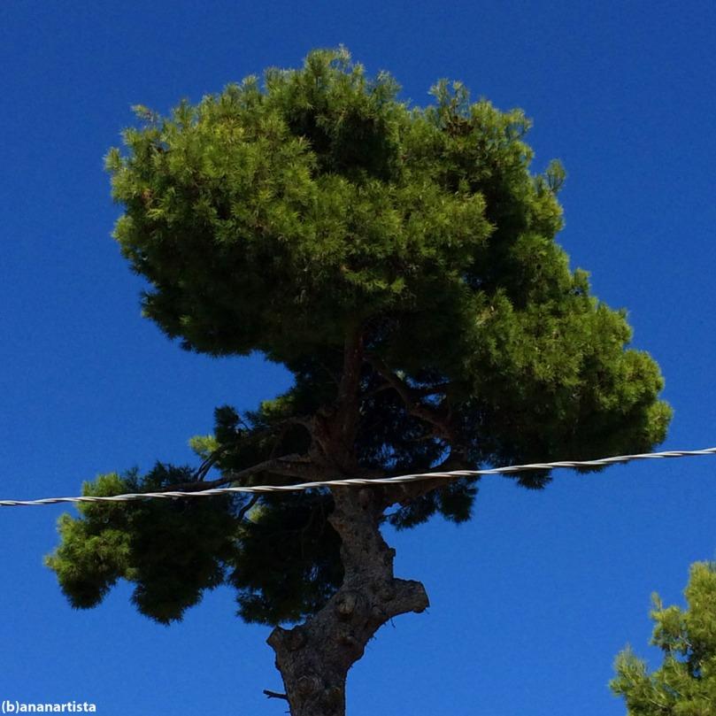pino marittimo con filo elettrico: fotografia di (b)ananartista sbuff