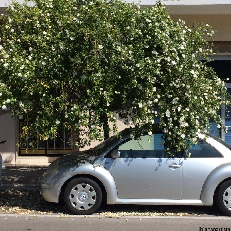 automobile fiorita: fotografia di (b)ananartista sbuff