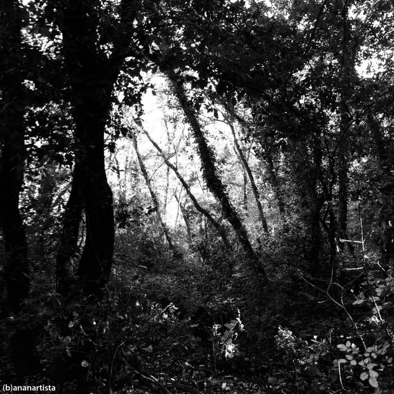 gita nel bosco: paesaggio di (b)ananartista sbuff