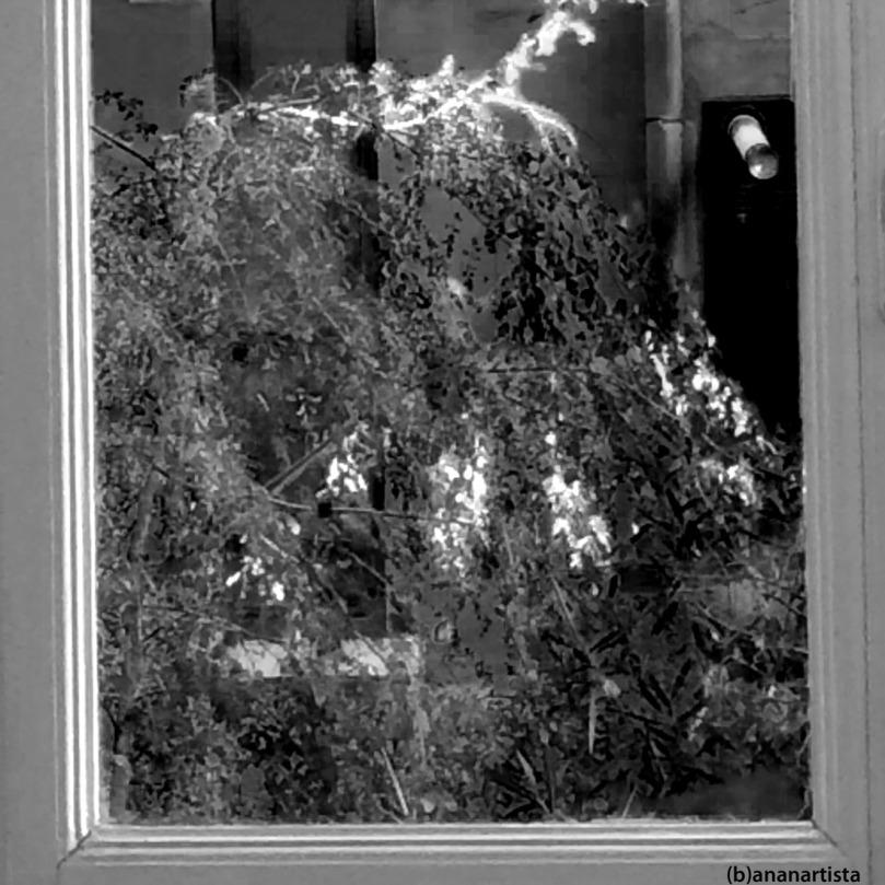tempesta interiore fuori dalla finestra: fotografia in bianco e nero di (b)ananartista sbuff