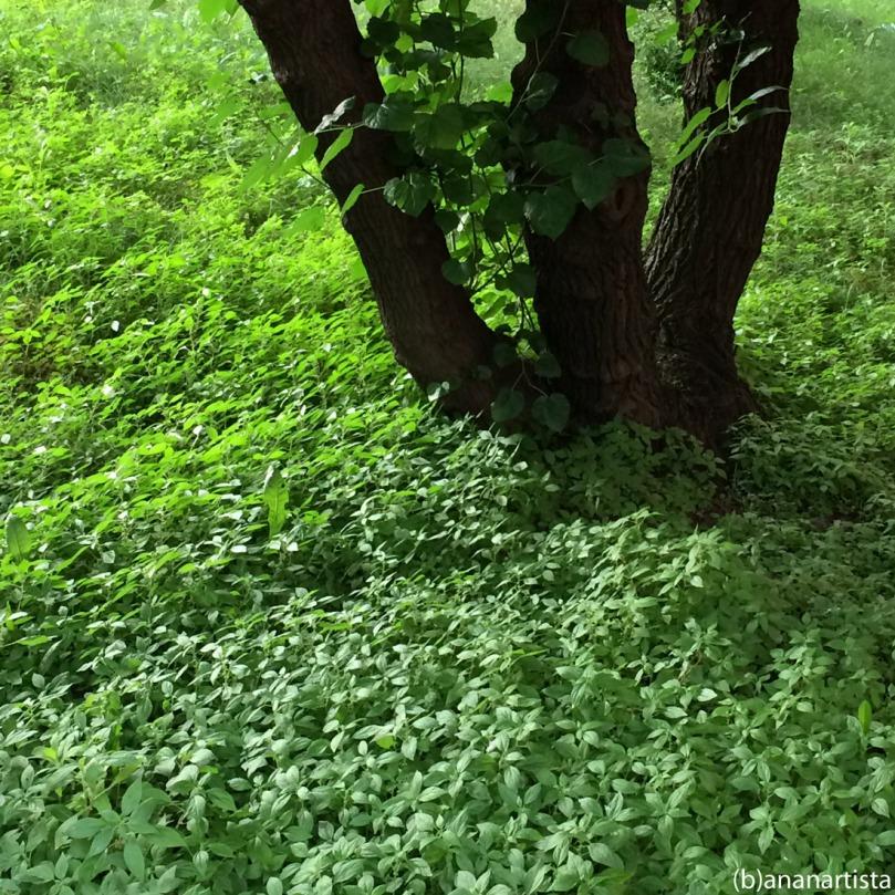 Garden of Eden: green photography by (b)ananartista sbuff