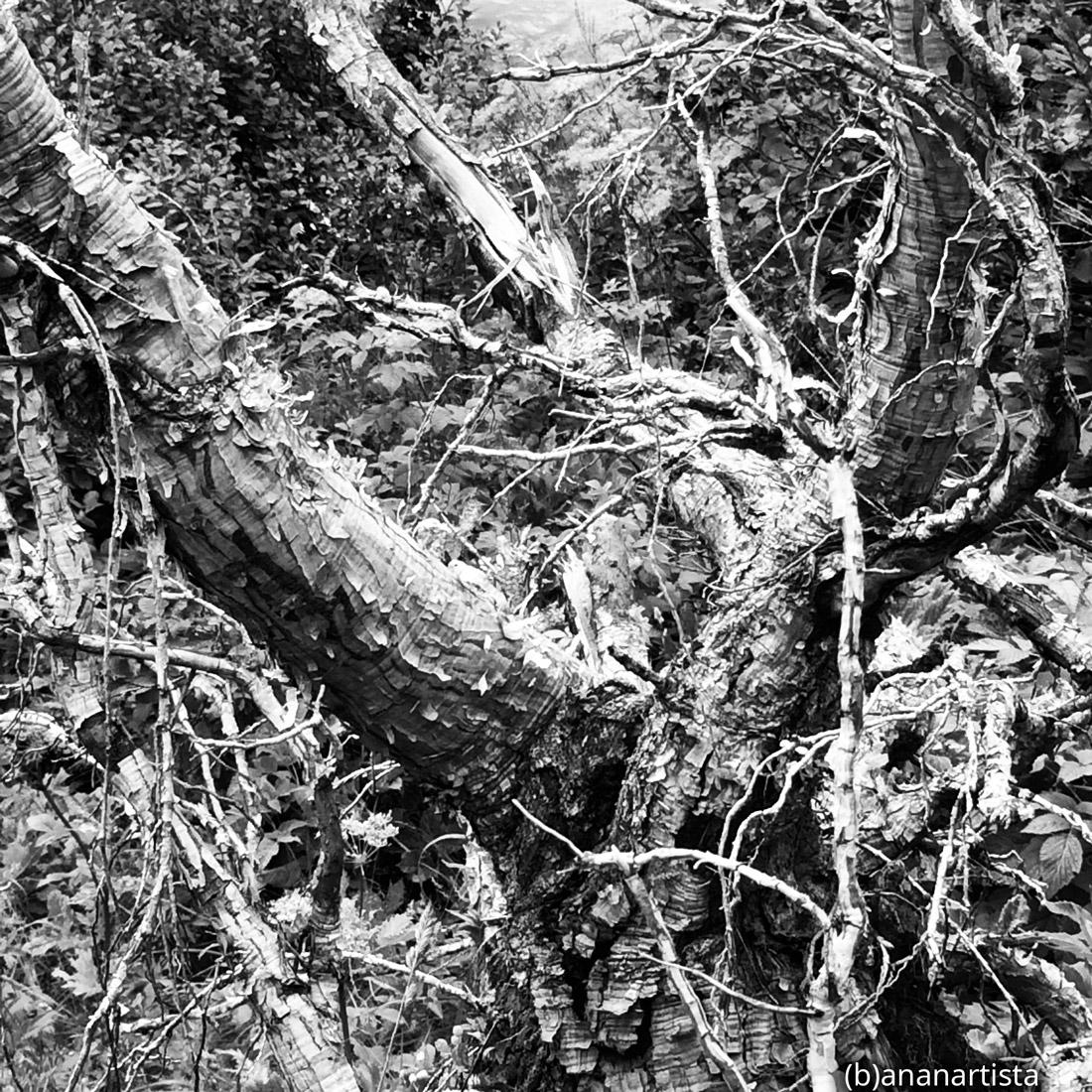 creature del bosco: fotografia di (b)ananartista sbuff