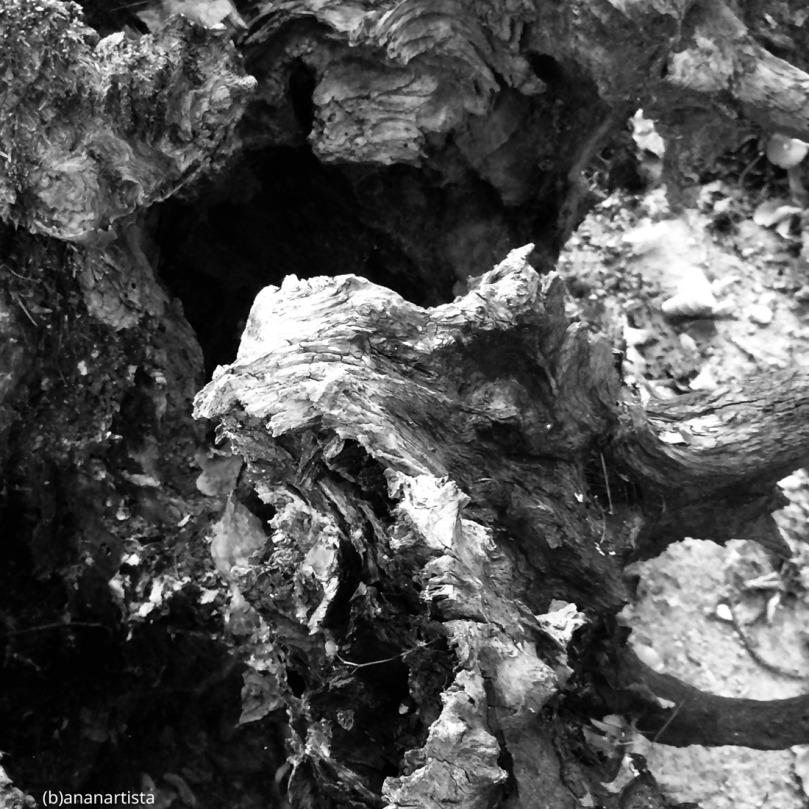 grotta spiritata fotografia di (b)ananartista sbuff