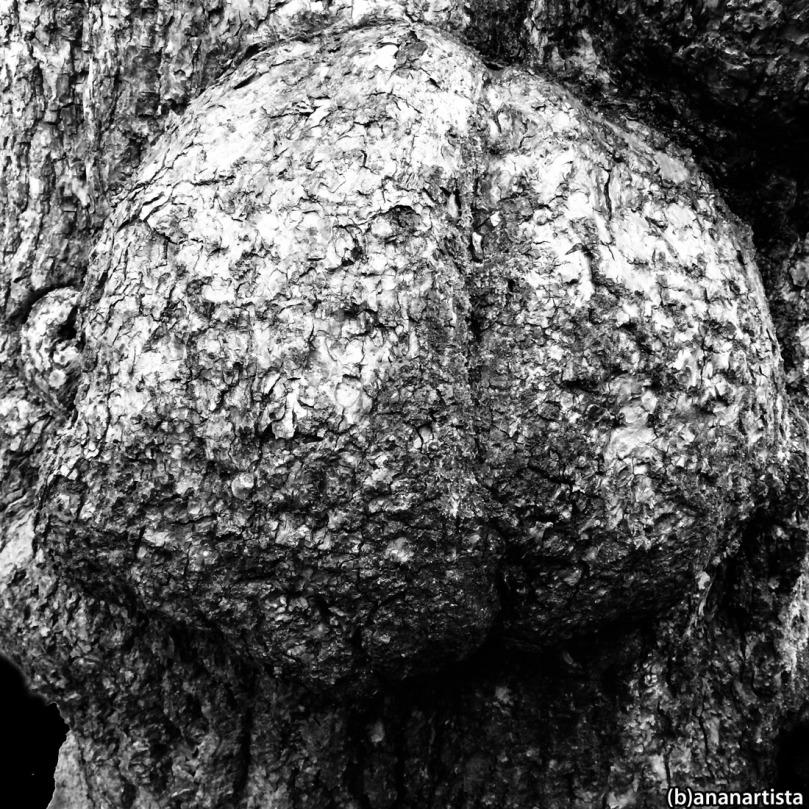 cranium homunculus: photography by (b)ananartista sbuff