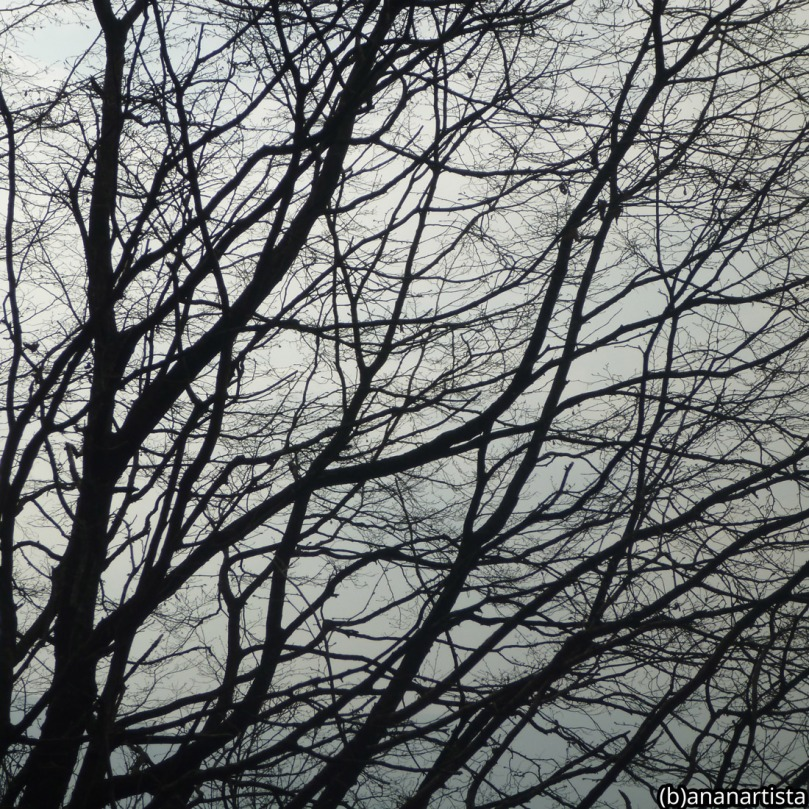 jutting limbs: photography by (b)ananartista sbuff