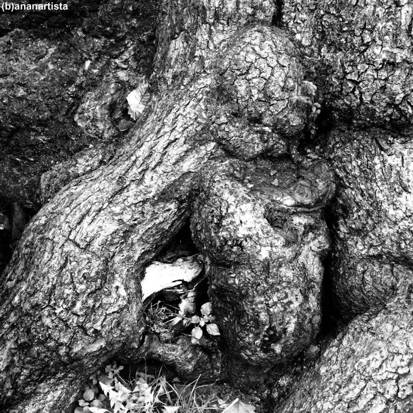 fetus: fotografia di (b)ananartista sbuff