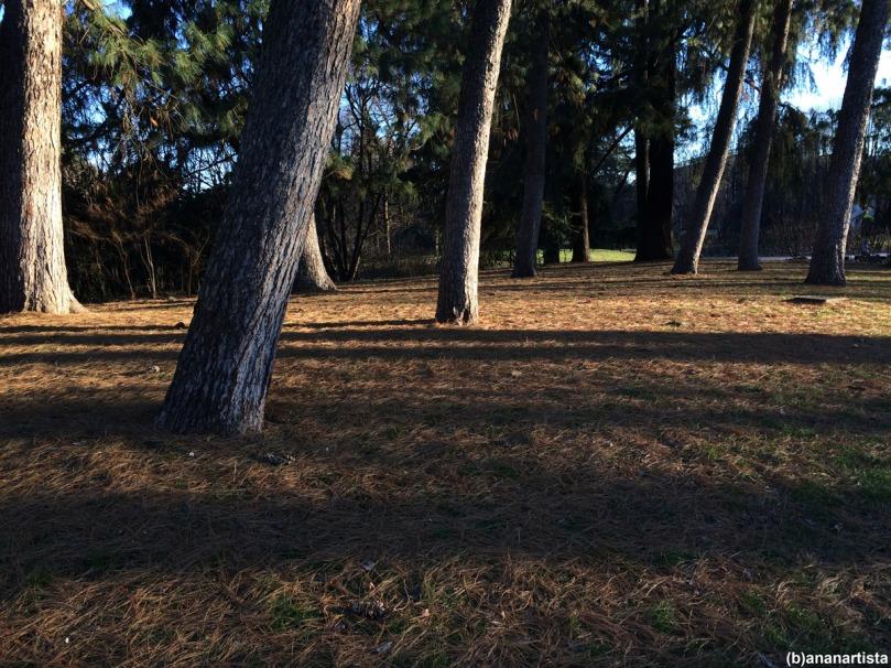 il segreto del bosco vecchio: fotografia di (b)ananartista sbuff