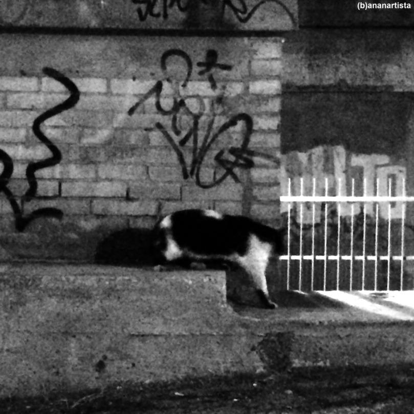 gatto in fuga: fotografia di (b)ananartista sbuff