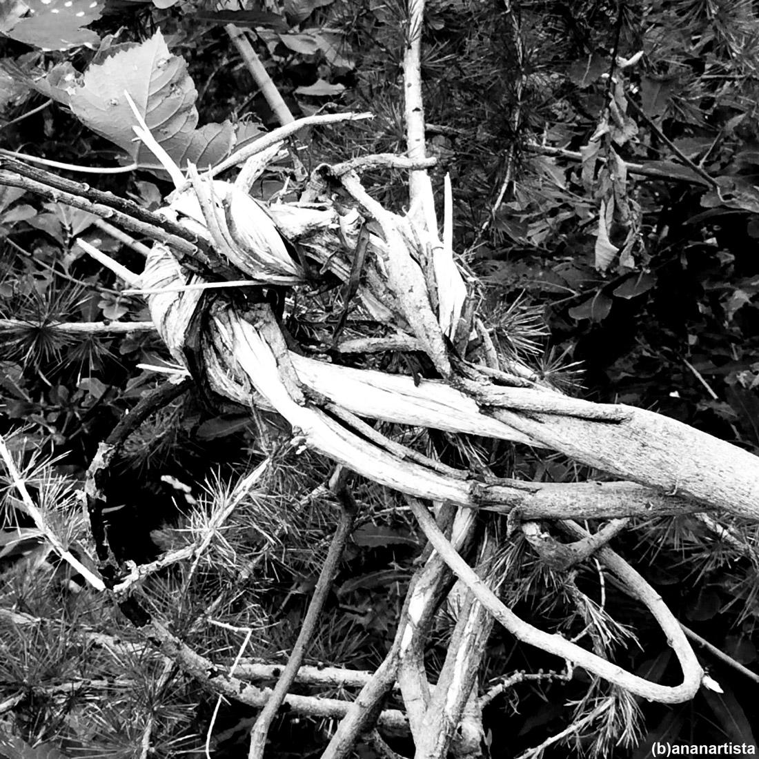 inner union: photography by (b)ananartista sbuff