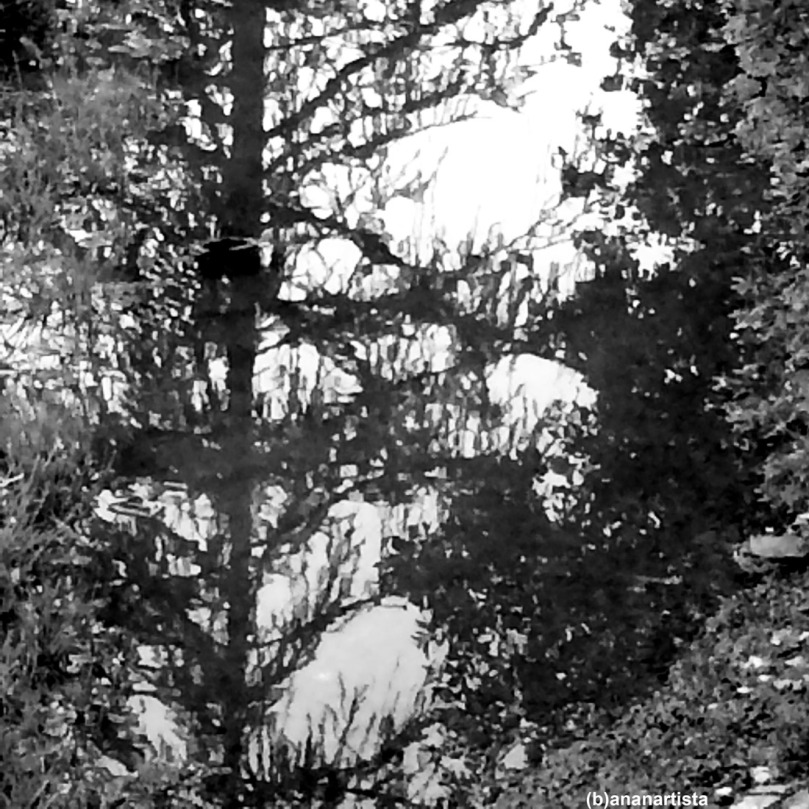 foresta nera: fotografia di (b)ananartista sbuff