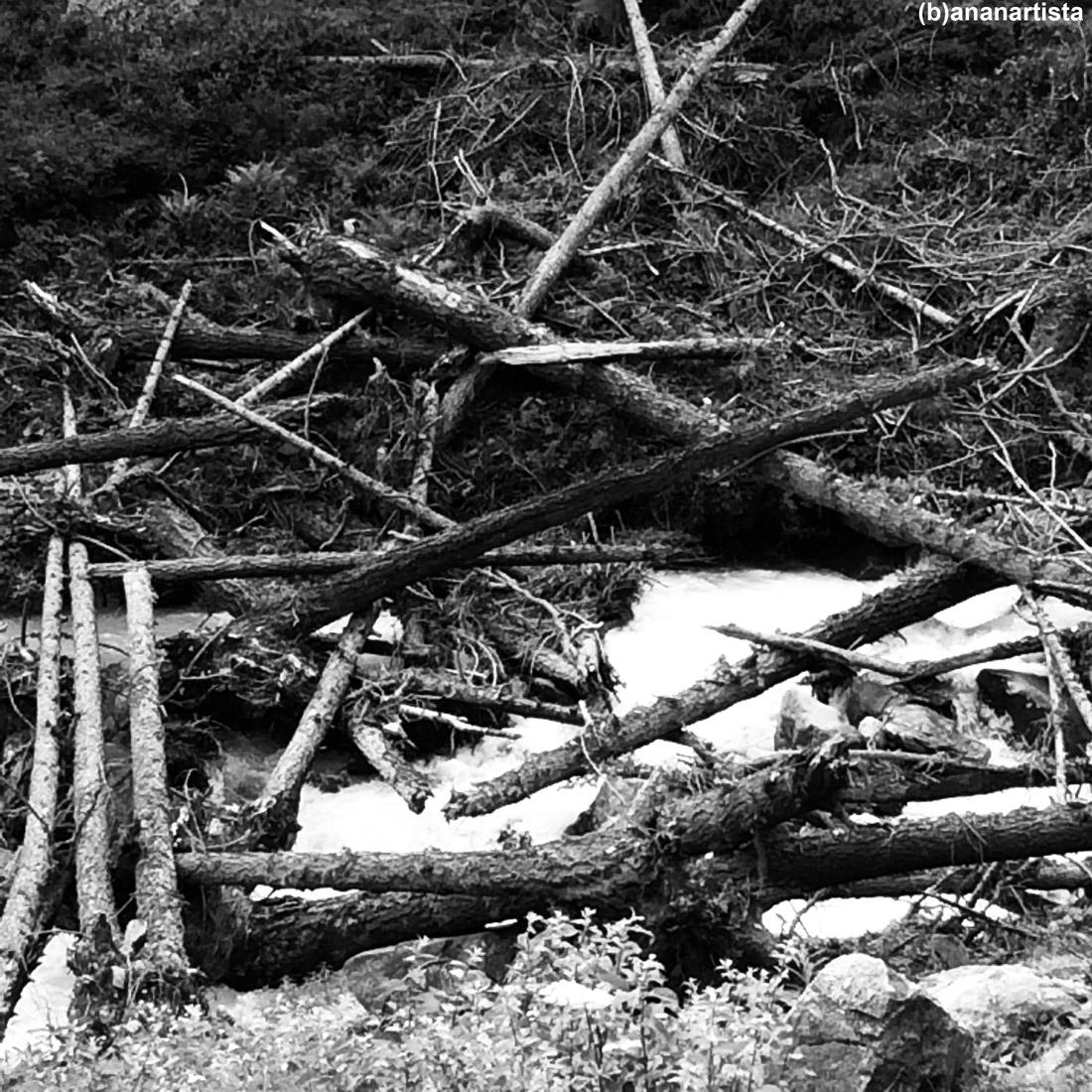 tronchi spezzati con poesia: fotografia di (b)ananartista sbuff