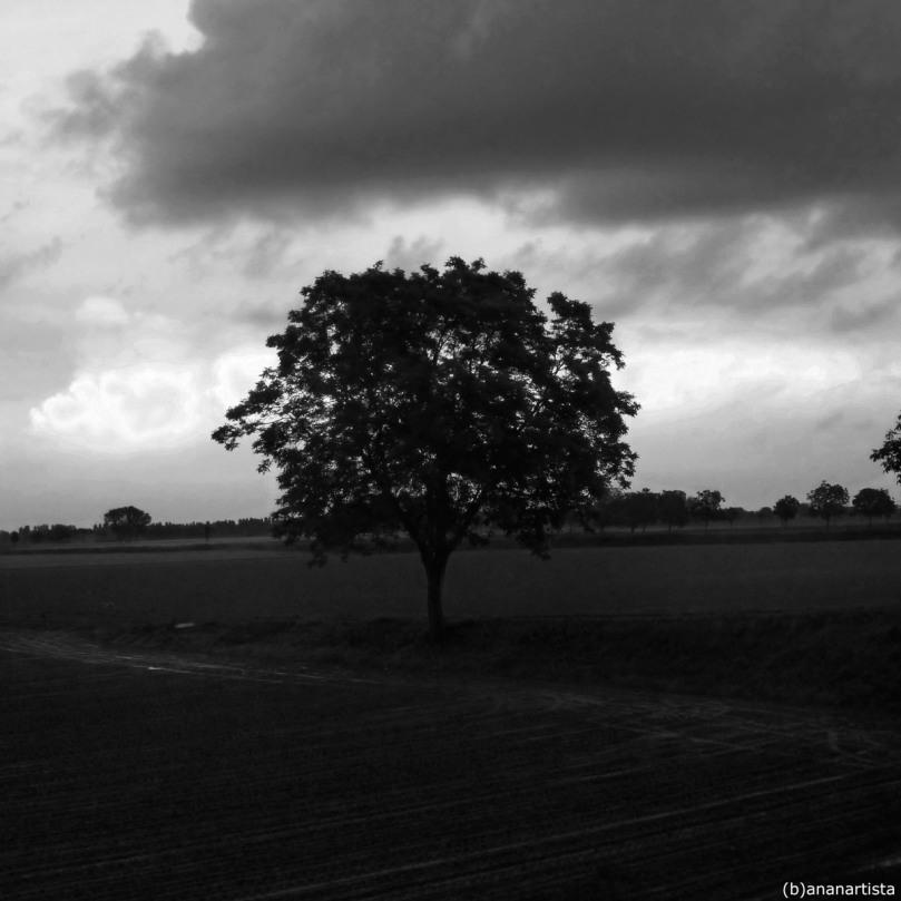 l'albero della discordia - fotografia di (b)ananartista sbuff