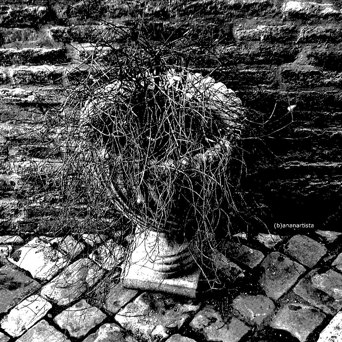 un vaso difficile bianco e nero fotografia di (b)ananartista sbuff