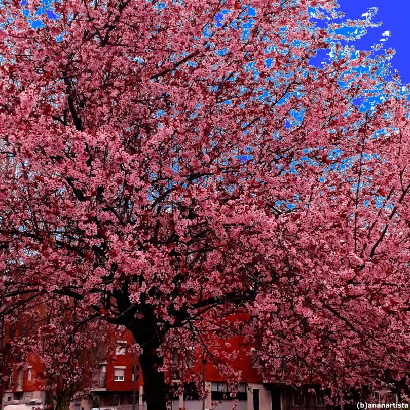 finalmente fiorito pruno : fotografia di (b)ananartista sbuff