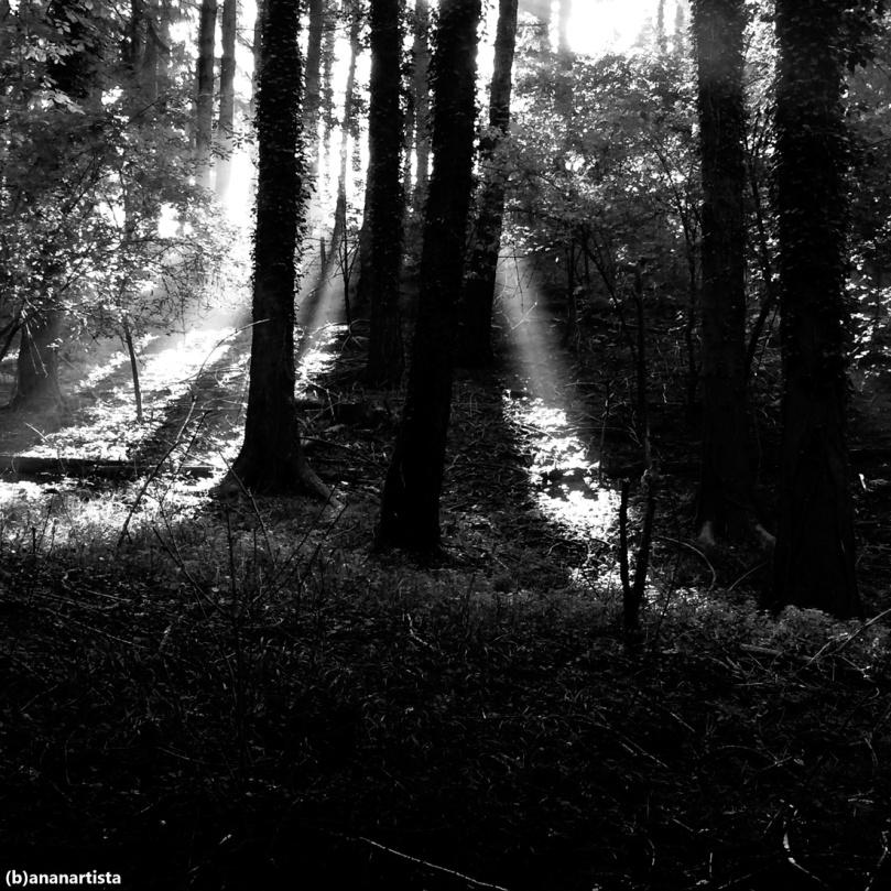 il segreto del bosco vecchio due dino buzzati by (b)ananartista sbuff